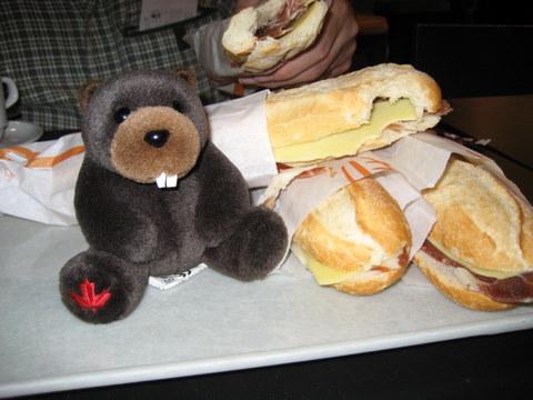 Beaver and Bocadillo